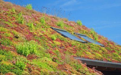 Zelené strechy: budúcnosť ekologického bývania
